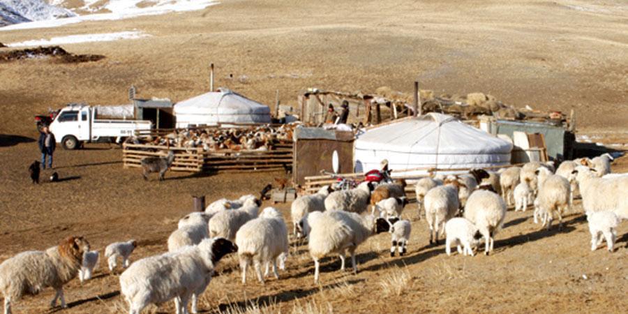 Төв аймгийн ихэнх нутгаар хүйтэн хавсарга тавьж, цасаар шуурна